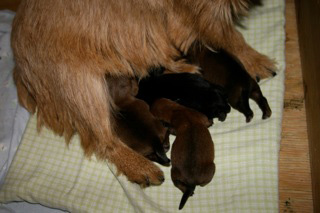 Early Care of the Puppies